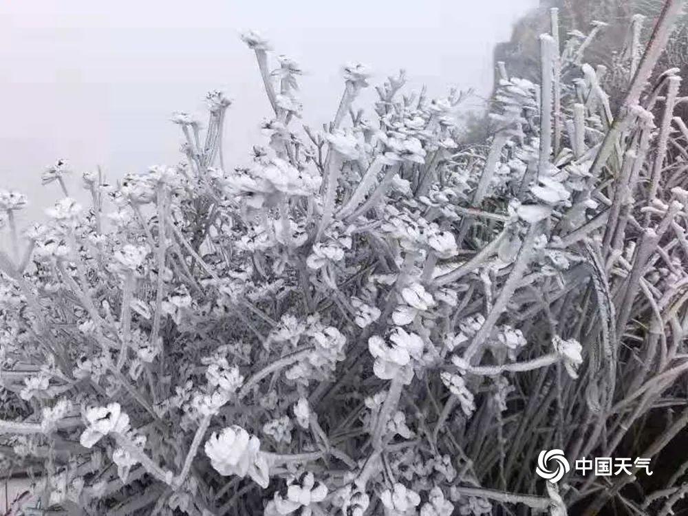 广东下雪了?真美!今年最冷已到,接下来东莞天气是……插图2