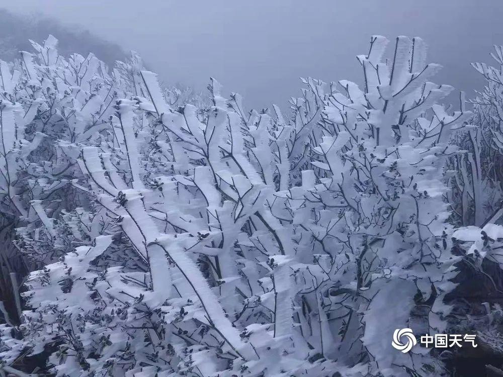广东下雪了?真美!今年最冷已到,接下来东莞天气是……插图4
