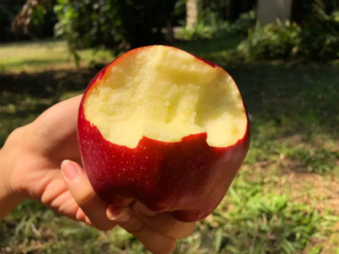 """""""国货之光""""29.9元10斤,比蛇果更好看、更好吃的甘肃花牛苹果新鲜上市,开启你的甜蜜之旅!插图30"""