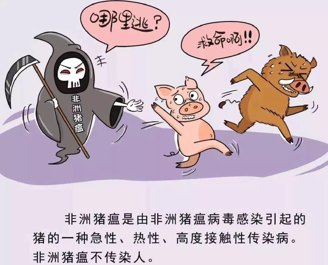 天呐!东莞人经常吃的三全灌汤水饺被曝检出非洲猪瘟病毒?插图14