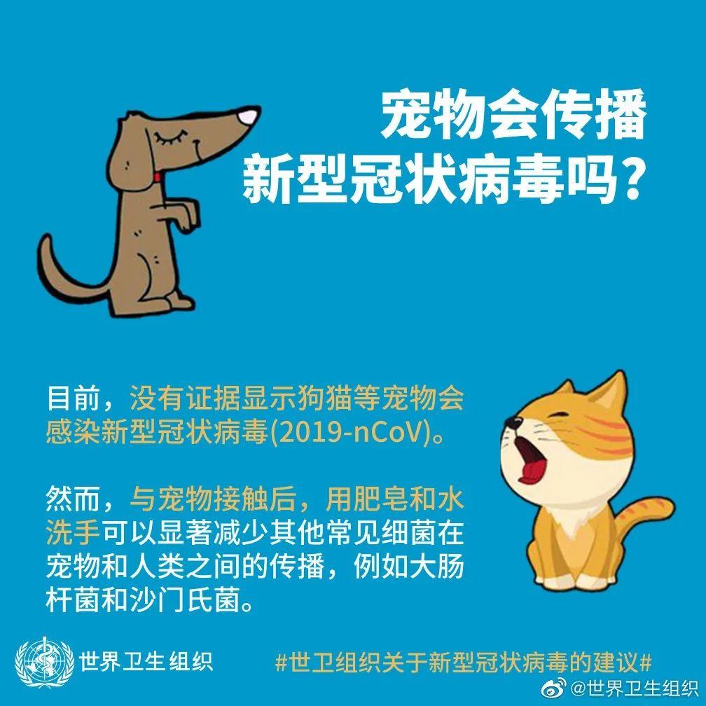 东莞一居委会发通知杀狗,宠物也有感染新冠肺炎风险?官方回应来了!插图56