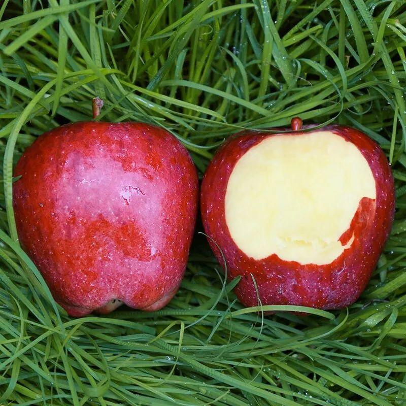 """""""国货之光""""29.9元10斤,比蛇果更好看、更好吃的甘肃花牛苹果新鲜上市,开启你的甜蜜之旅!插图24"""
