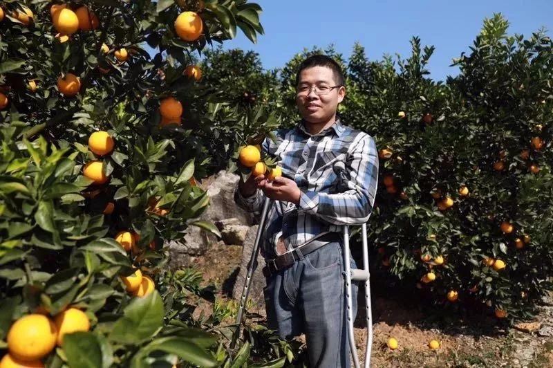 助力麻阳冰糖橙走出大山,留守老人一生良心种植,5斤仅19.9元,甜润爽口,生态健康!插图30