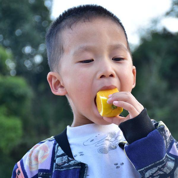 助力麻阳冰糖橙走出大山,留守老人一生良心种植,5斤仅19.9元,甜润爽口,生态健康!插图42