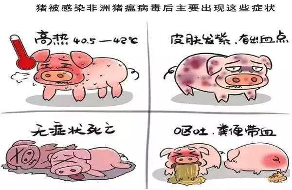天呐!东莞人经常吃的三全灌汤水饺被曝检出非洲猪瘟病毒?插图20
