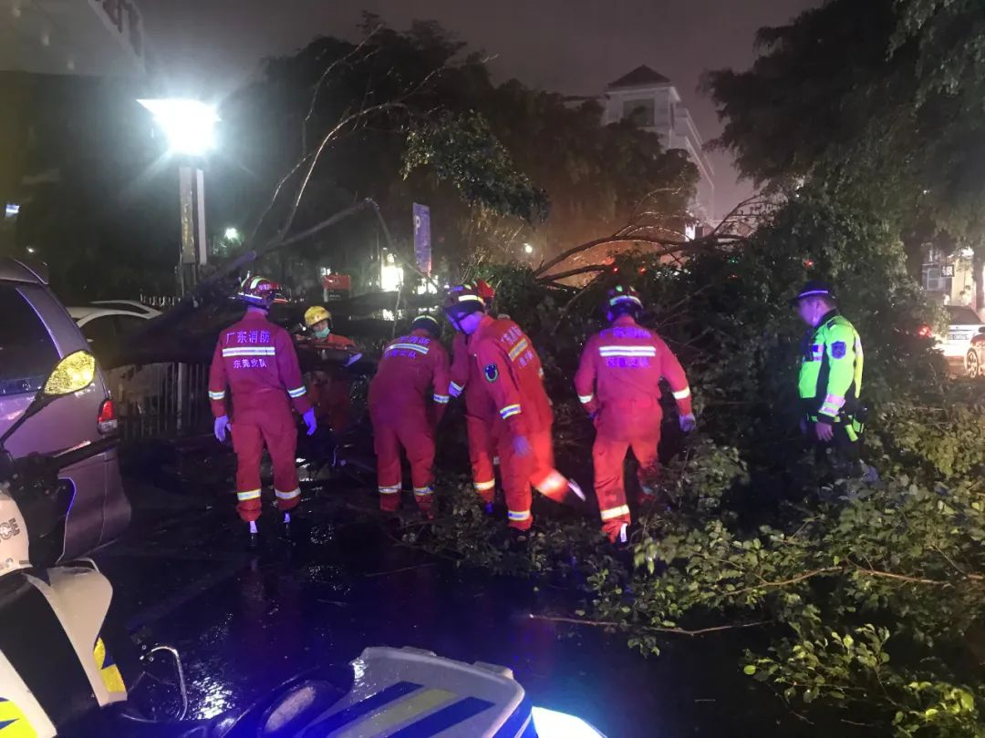 突发! 东莞昨晚狂风雷暴雨的4小时, 有人被大树压着, 有人被困, 有人……插图6