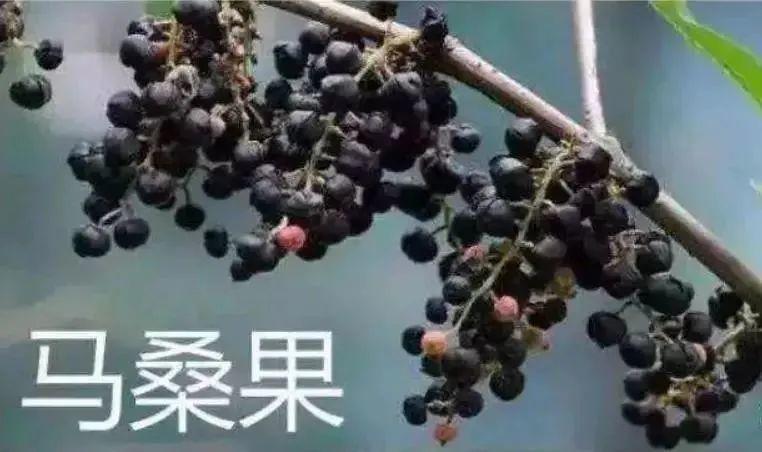 注意! 吃了这种果子, 4个孩子在路边呕吐, 一人昏迷! 东莞特别多….插图26