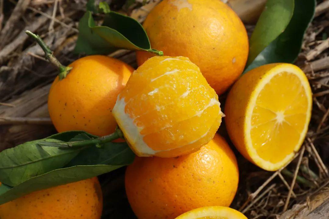 助力麻阳冰糖橙走出大山,留守老人一生良心种植,5斤仅19.9元,甜润爽口,生态健康!插图46