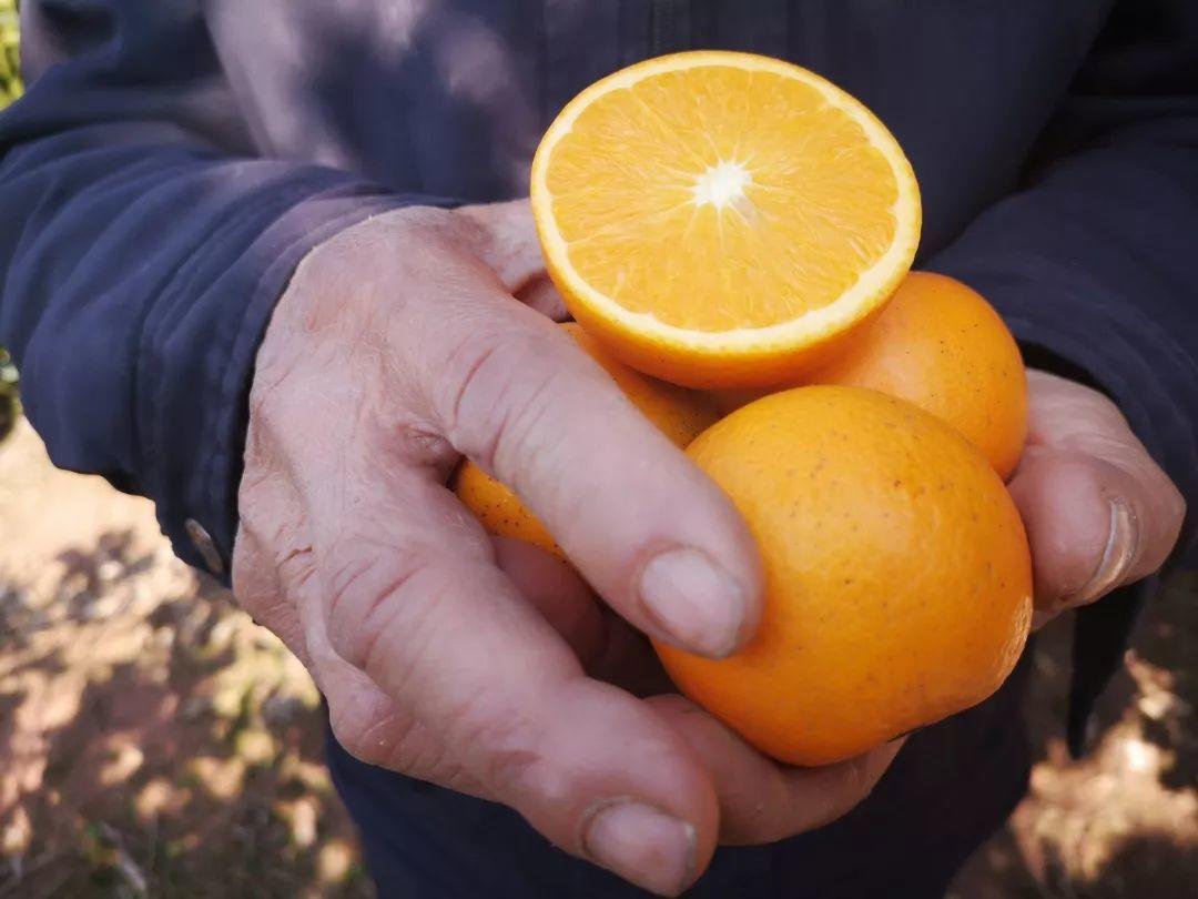 助力麻阳冰糖橙走出大山,留守老人一生良心种植,5斤仅19.9元,甜润爽口,生态健康!插图