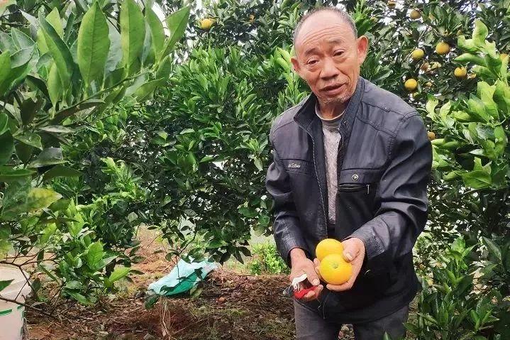 助力麻阳冰糖橙走出大山,留守老人一生良心种植,5斤仅19.9元,甜润爽口,生态健康!插图22