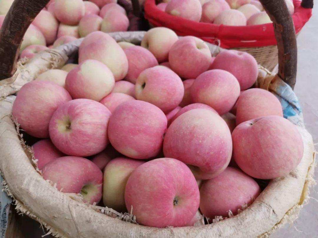 """愁啊!万斤""""红富士苹果""""无人收,4元/斤!果农:卖不掉今年就白干了…插图34"""