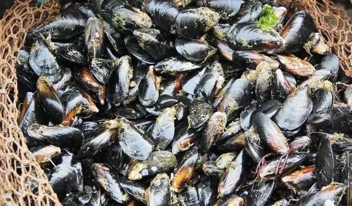 紧急提醒!东莞人近期千万别吃这种海鲜!官方已发布预警通告!插图