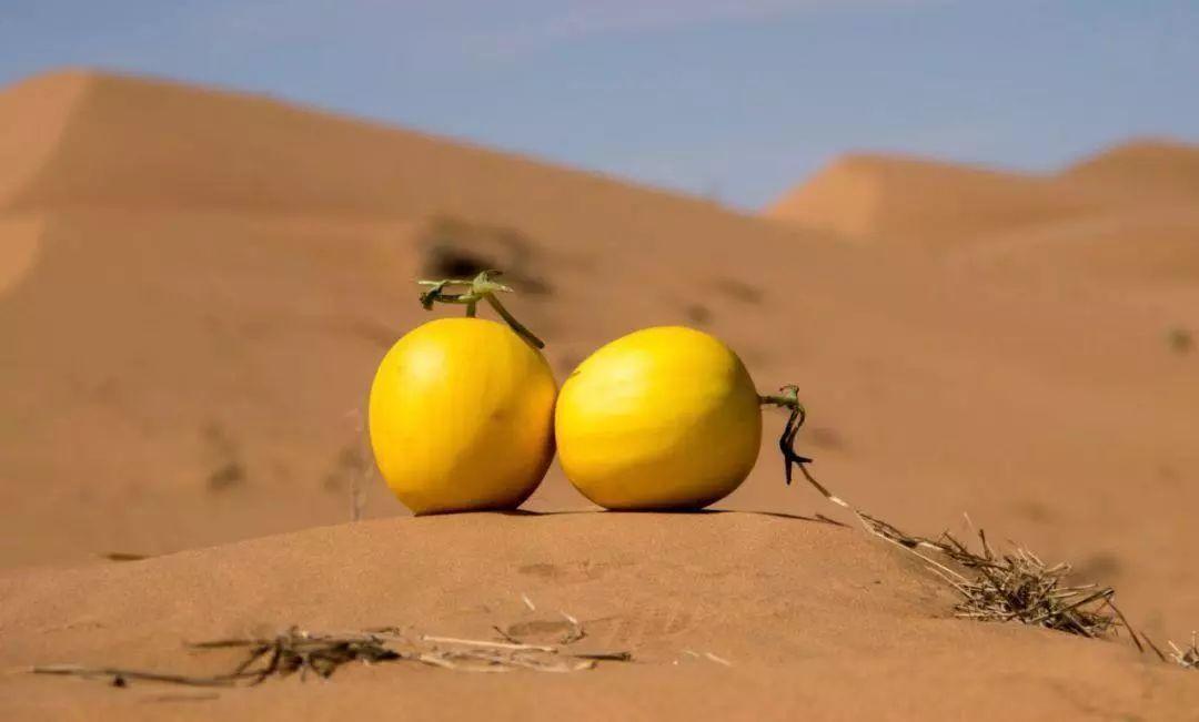 甜了你的嘴,暖了瓜农的心!守护沙漠民勤蜜瓜,29.9元包邮!插图24