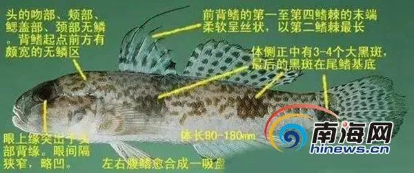 @东莞人,最近别吃这种鱼和这些菜:有毒可致命!快转告家人插图6
