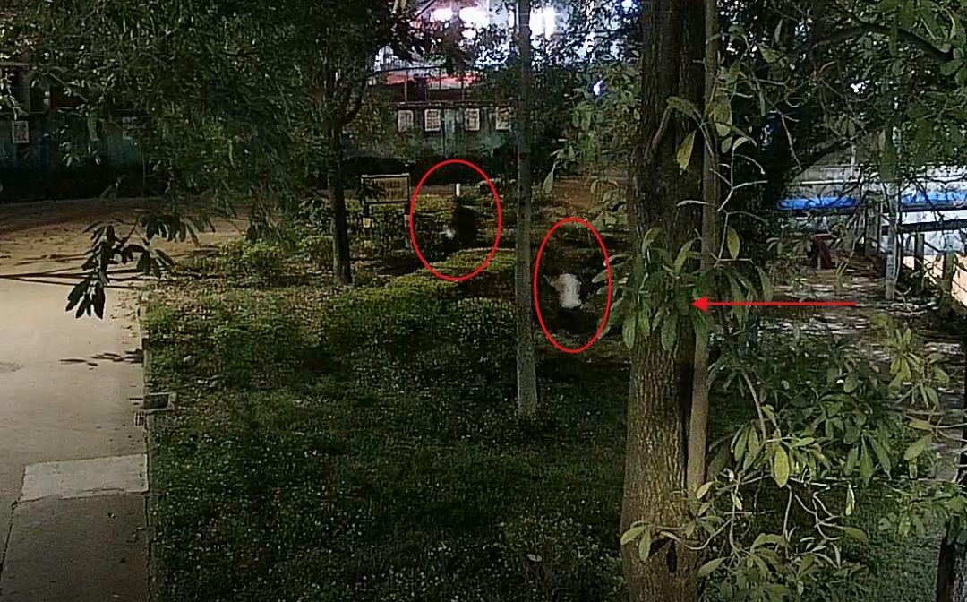 东莞一女子深夜被2名男子尾随!公共视频拍下惊险一幕…插图2