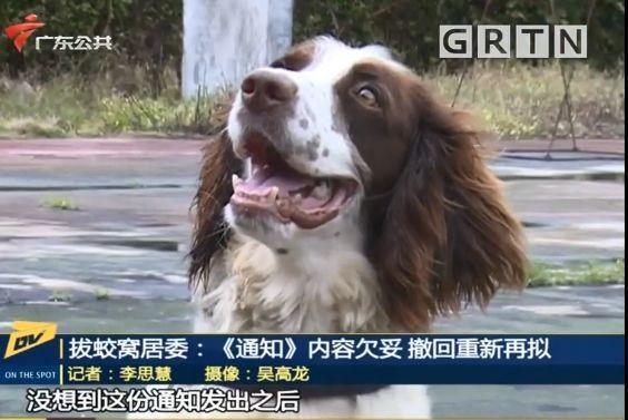 东莞一居委会发通知杀狗,宠物也有感染新冠肺炎风险?官方回应来了!插图36