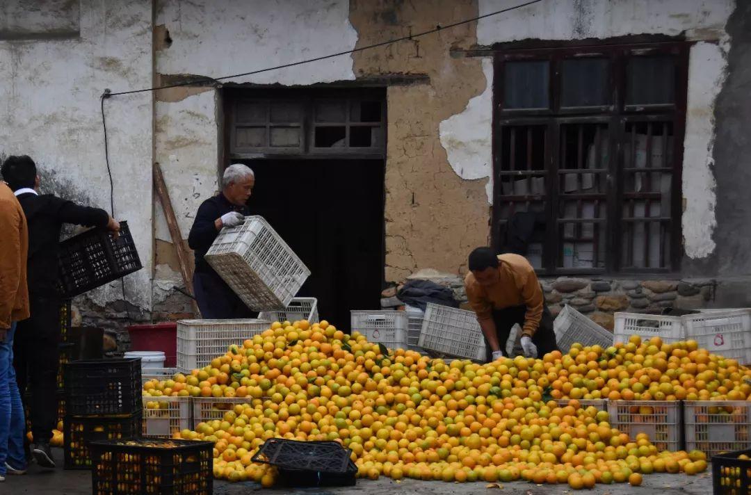 助力麻阳冰糖橙走出大山,留守老人一生良心种植,5斤仅19.9元,甜润爽口,生态健康!插图4