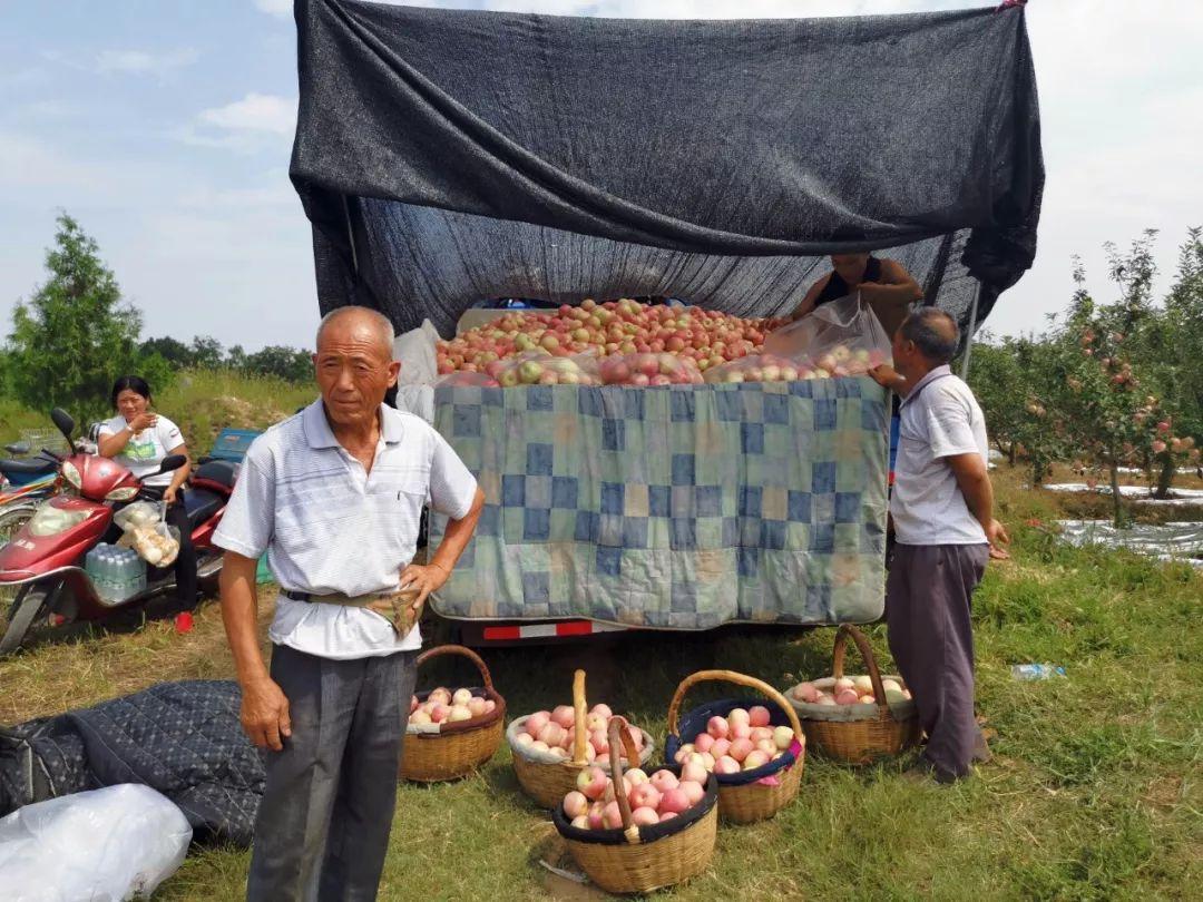 """愁啊!万斤""""红富士苹果""""无人收,4元/斤!果农:卖不掉今年就白干了…插图2"""