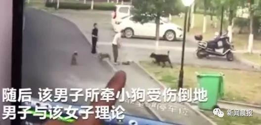 女子遛3只狗不牵绳!男子遭狗撕咬受伤严重,缝了30多针
