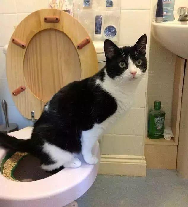 男子上厕所太用力心脏骤停…在卫生间里这样做,可能会要了你的命!插图2