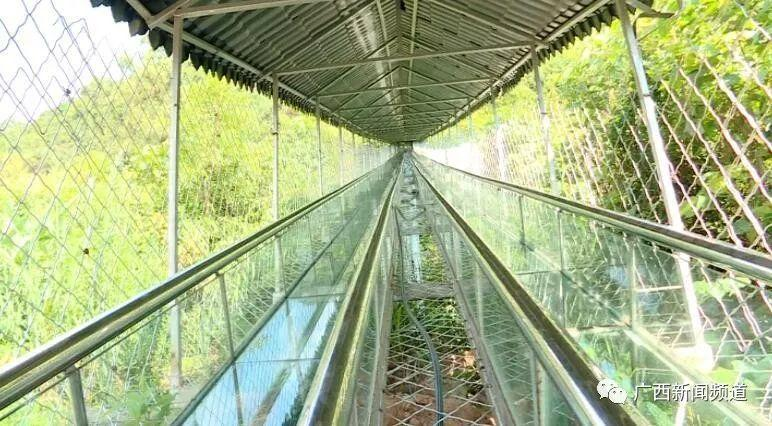 网红玻璃滑道出事!护栏被撞破1死6伤,游客回忆惊魂瞬间插图12