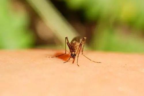 预警!东莞已有7人疑患这种病被隔离,都来自同一条村!感染原因竟是……