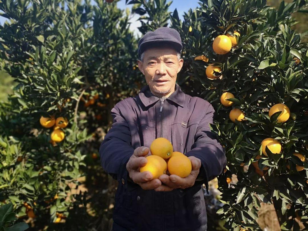助力麻阳冰糖橙走出大山,留守老人一生良心种植,5斤仅19.9元,甜润爽口,生态健康!插图2