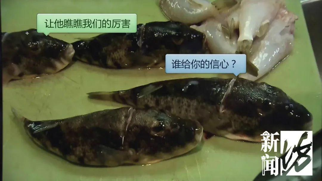 剧毒,别乱吃!男子冒死吃这种鱼后变成植物人!广东已有人因它而丧命!插图10