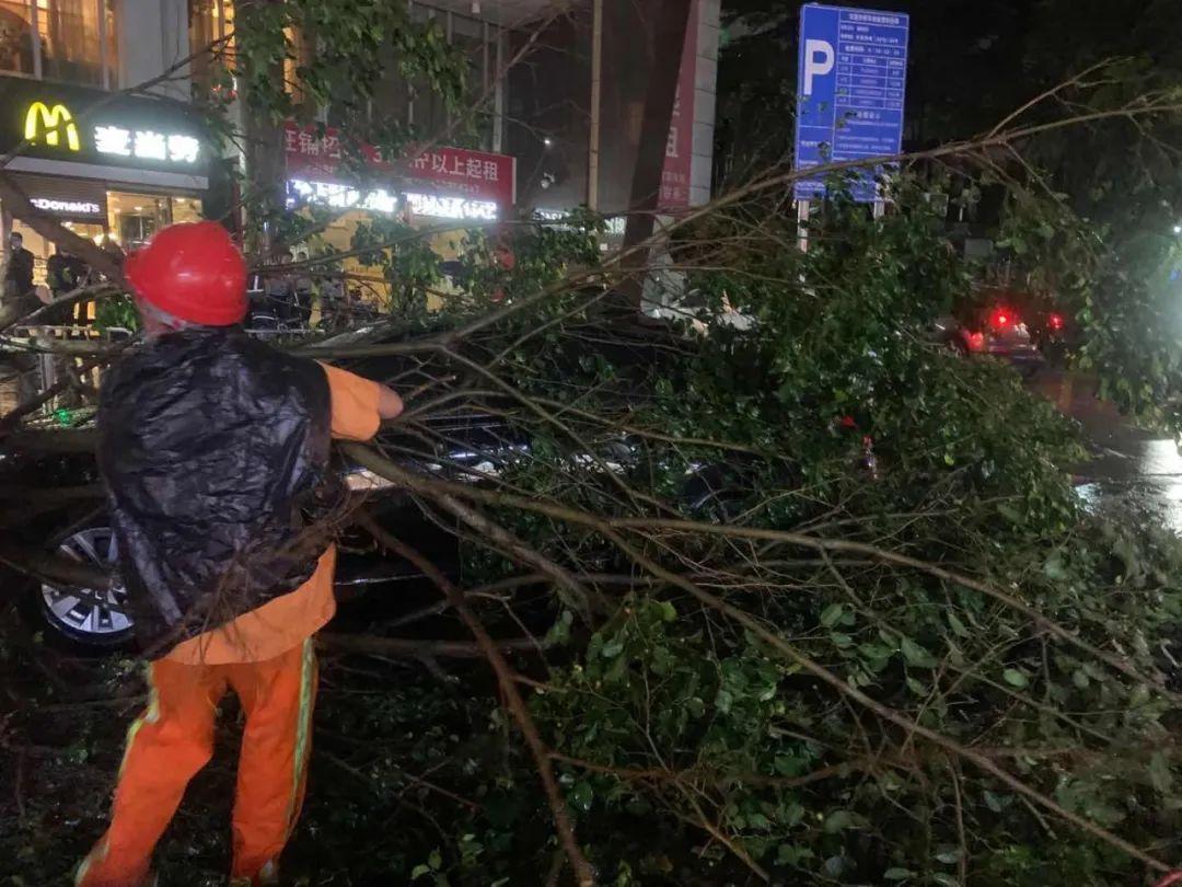 突发! 东莞昨晚狂风雷暴雨的4小时, 有人被大树压着, 有人被困, 有人……插图50