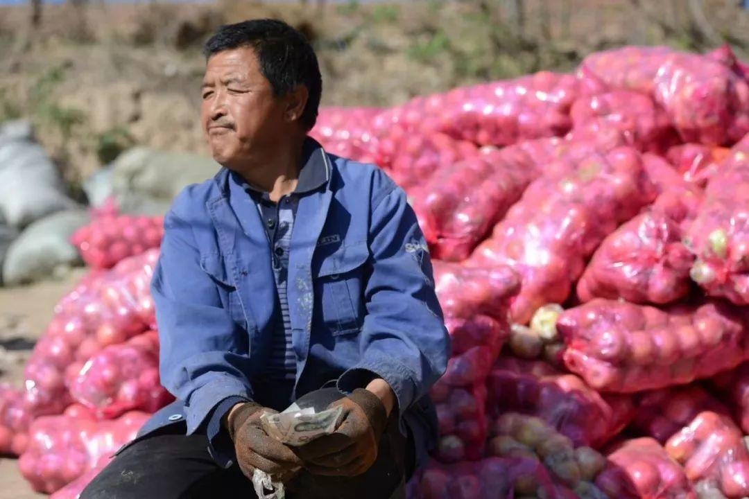 """愁啊!万斤""""红富士苹果""""无人收,4元/斤!果农:卖不掉今年就白干了…插图"""