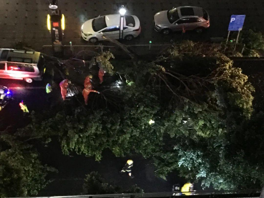突发! 东莞昨晚狂风雷暴雨的4小时, 有人被大树压着, 有人被困, 有人……插图4