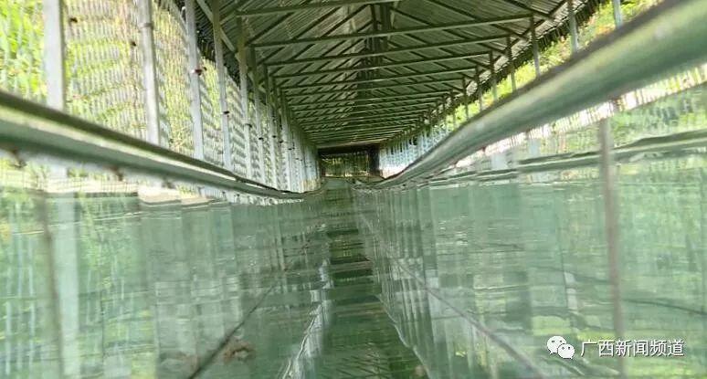 网红玻璃滑道出事!护栏被撞破1死6伤,游客回忆惊魂瞬间插图4