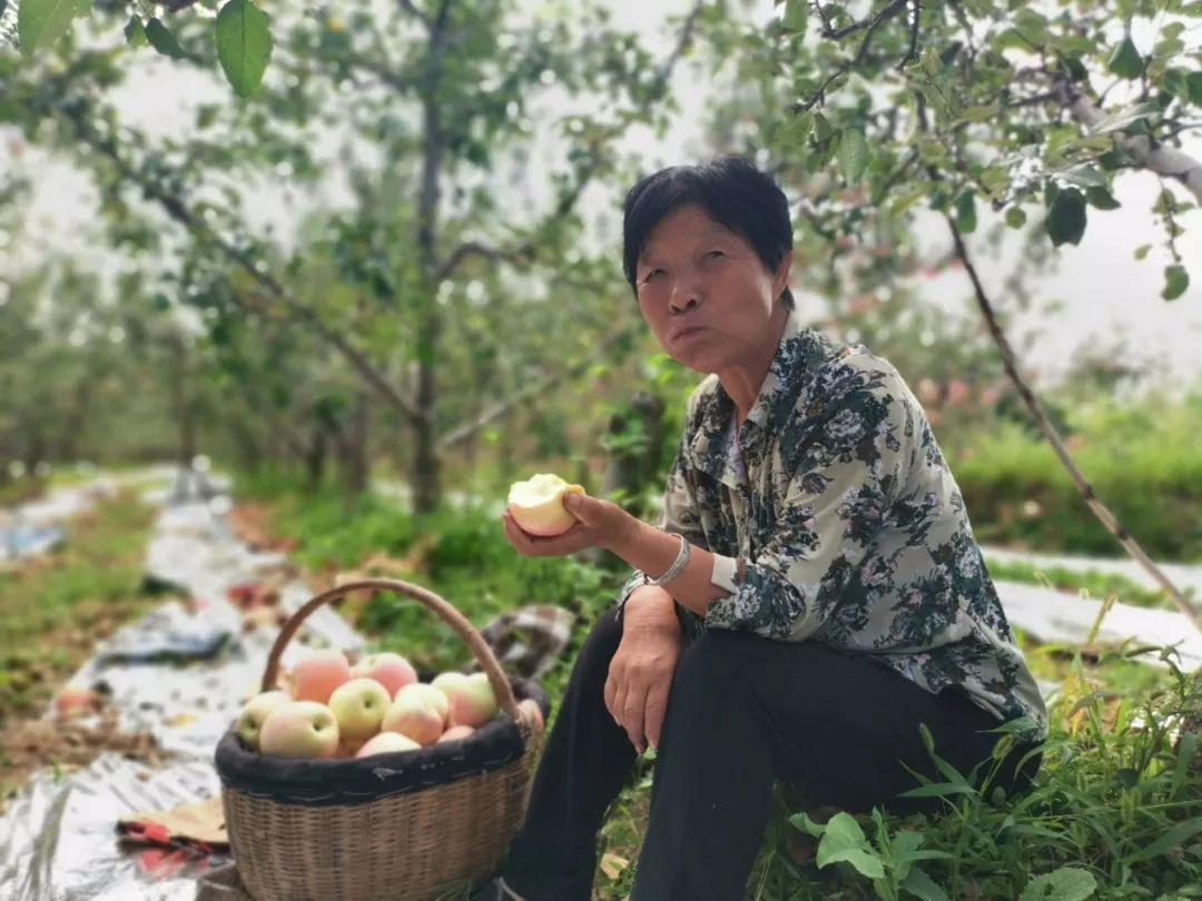"""愁啊!万斤""""红富士苹果""""无人收,4元/斤!果农:卖不掉今年就白干了…插图32"""