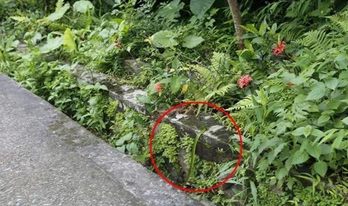 可怕!东莞多个小区公园有毒蛇出没!这7个镇街的街坊要小心!