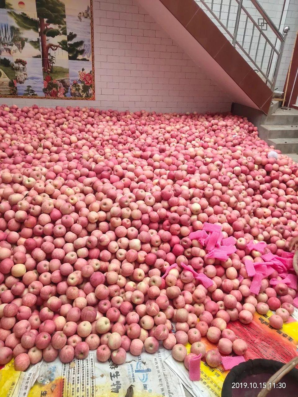 """愁啊!万斤""""红富士苹果""""无人收,4元/斤!果农:卖不掉今年就白干了…插图28"""