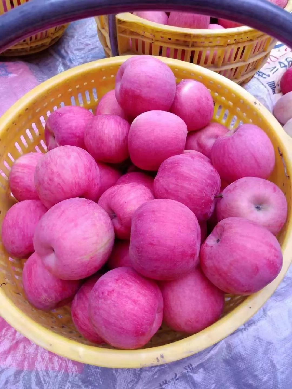 """愁啊!万斤""""红富士苹果""""无人收,4元/斤!果农:卖不掉今年就白干了…插图24"""